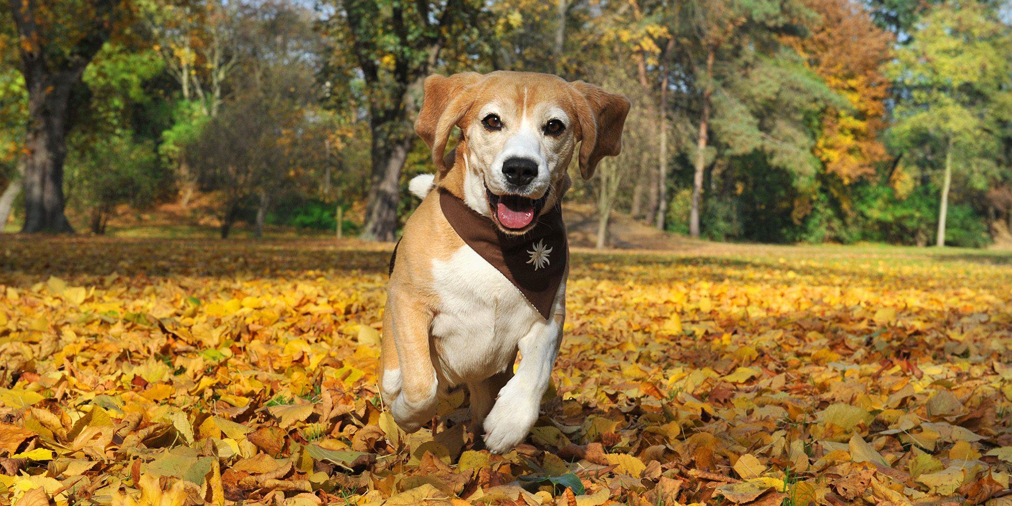 Hunde Fotoshooting Bewegungsaufnahmen-Tierfotograf-Koeln