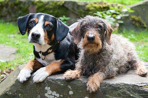 Hundefotografie - Tierfotoshooting in Köln