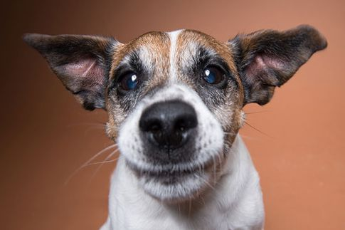 Hunde-Fotoshooting - Schnapp Fotos