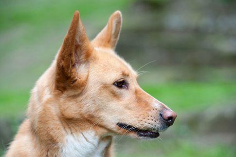 Fotoshooting mit meiner Hündin Leyla - Hunde Fotografie