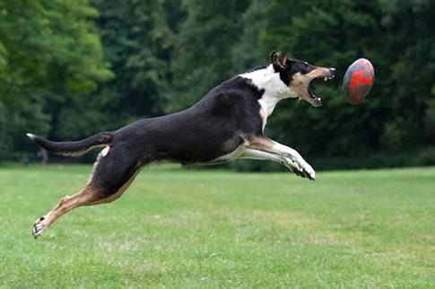 Hundefotoshooting - Tierfotografie Hunde Fotostudio Zerbes in Köln
