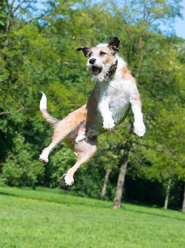 Hundeshooting Termin Fotostudio-Köln