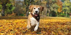 Das Hunde Fotoshooting in direkter Nähe des Fotostudios mit Tier Portraits, Bewegungsfotos und gemeinsamen Bildern mit Frauchen und Herrchen.